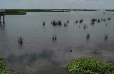 Sharing Lake Okeechobee's declining water supply stresses environment