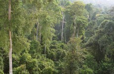 """World Environment Day"" includes release of a New Forest Report"