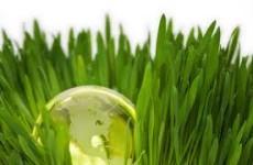 Earth in Green Lawn