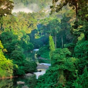 Rainforest in Borneo