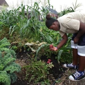 Picking Vegetabes in an Urban Garden