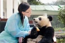 Woman empathizing with Panda