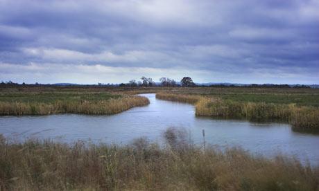Wetlands - A biodeversity resource or useless swamp?
