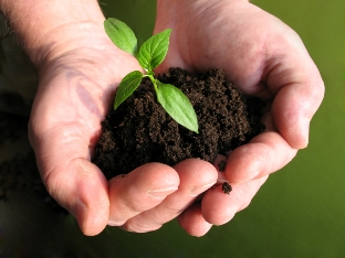 Earth Ehics: Sustainable agriculture