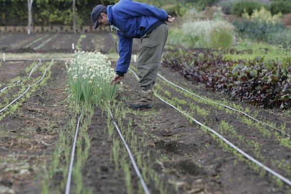 organic farming in San Diego