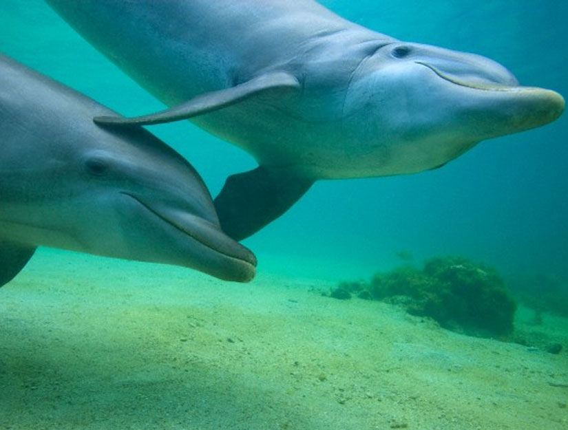2 dolphins in shallow blue green water